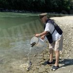 Seimila carpe rilasciate in Tanaro dai pescatori sportivi