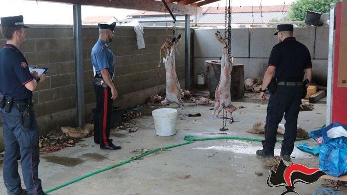 I Carabinieri Forestali sco un macello islamico abusivo