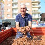 Nocciole: i primi prezzi dell'annata vanno da 340 a 360 euro