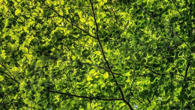 Si schianta fra gli alberi con l'ultraleggero