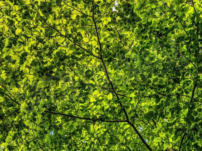 alberi foglie