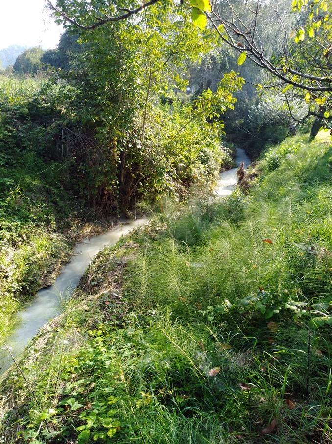 Il rio Borbore coperto da uno strato biancastro