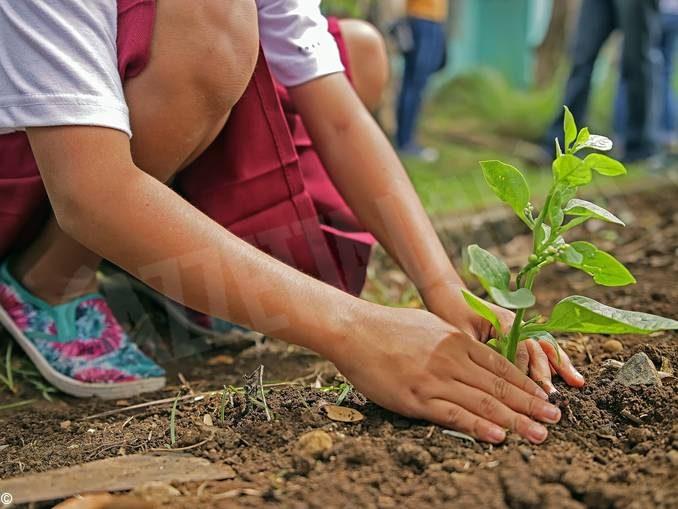 Piantiamo 60 milioni di alberi, uno per ogni italiano