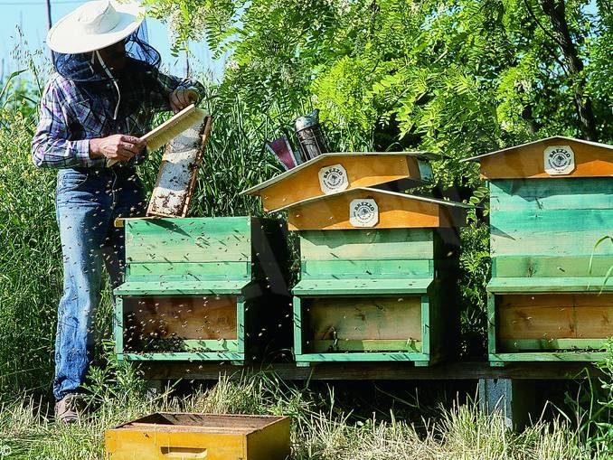Il genocidio silenzioso: le api muoiono di fame 1
