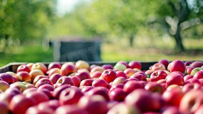Controlli alle aziende agricole contro il caporalato: contestate violazioni a tre imprenditori