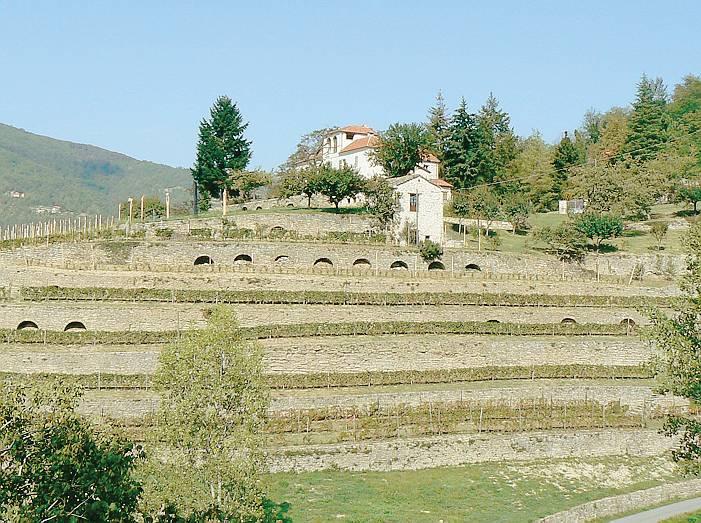 terrazzamenti Monte Oliveto