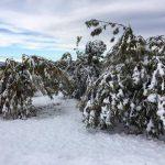 Neve: vallate montane senza corrente e danni a castagneti e noccioleti nella Granda