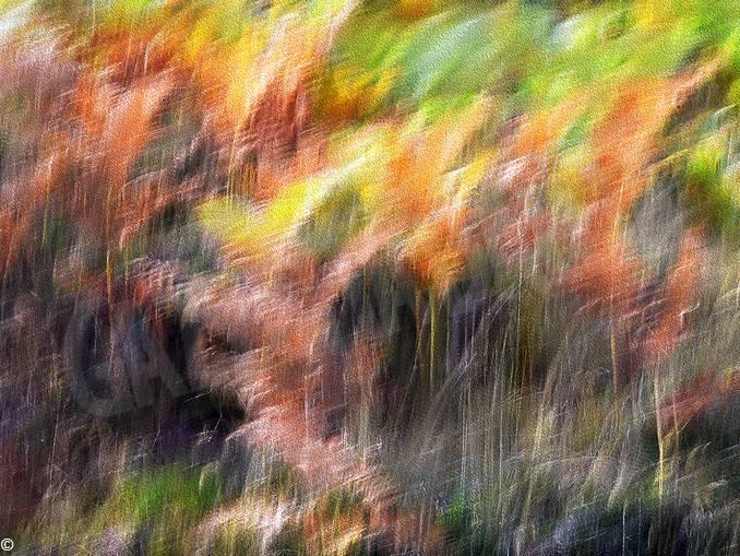 Giorgio Gallo – vento d'autunno