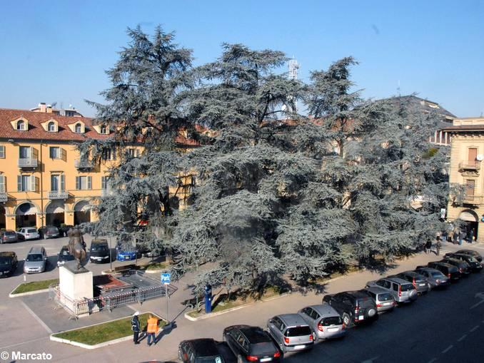 alba piazza savona 2008-2