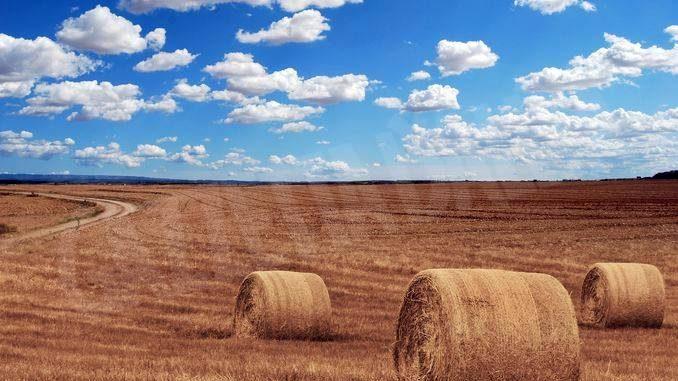 Agricoltura: le aziende sono gestite da uomini