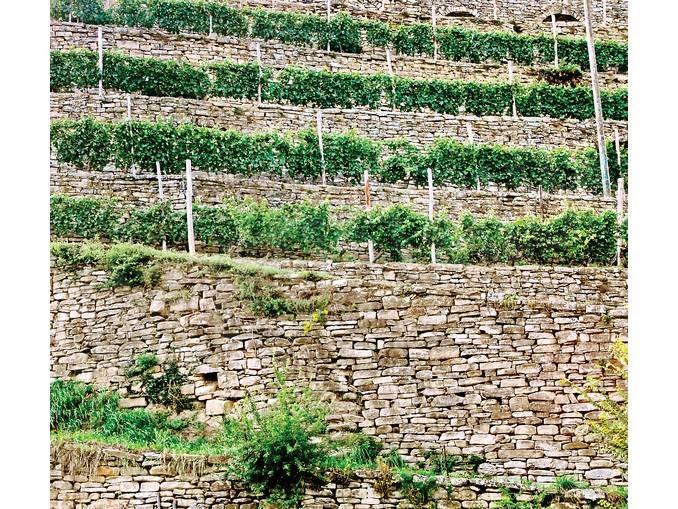 Con il paesaggio rurale si favorisce lo sviluppo dell'alta Langa