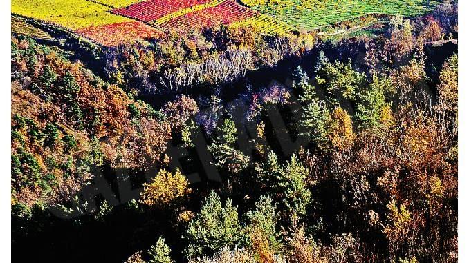 Gestione dei boschi in alta Langa: 67mila euro dal Gal
