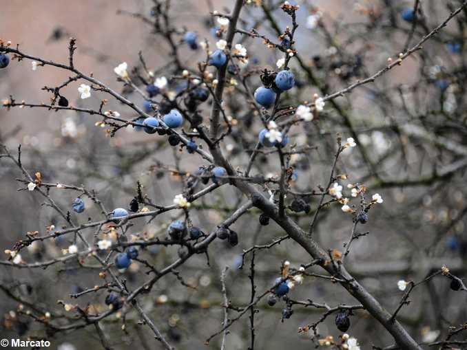 bra madonna fiori statua alberione08