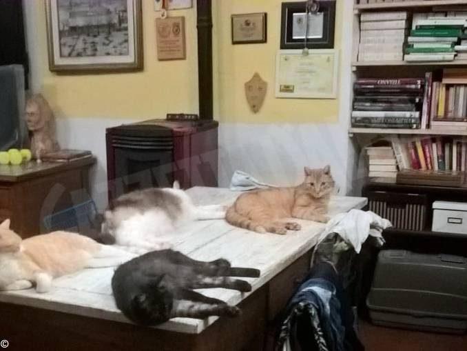 La generosità di Luciana, l'amica dei gatti randagi di Sommariva Perno