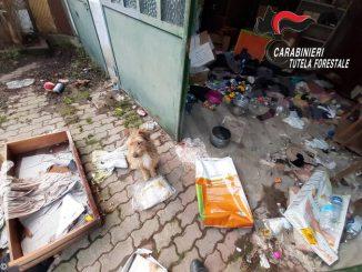L'attività dei Carabinieri forestali: denunce per roghi di rifiuti e abbandono di animale