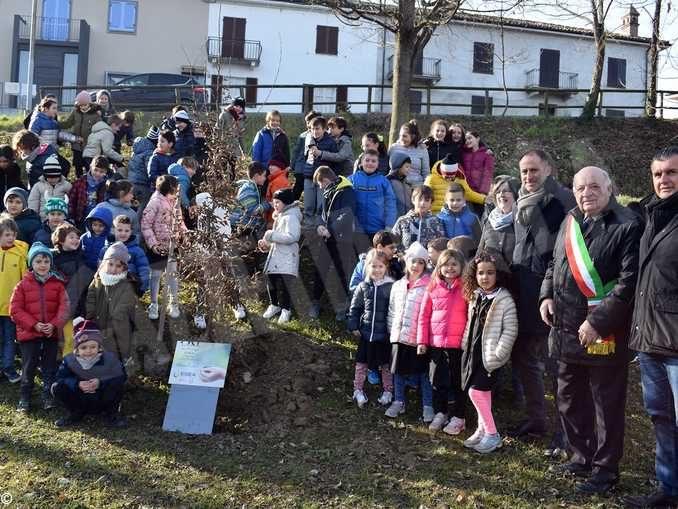 I 30 alberi del bosco incantato di piazza Ferrero donati da Egea ai Comuni del territorio 1
