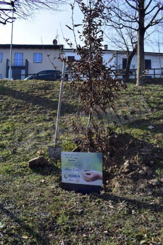 I 30 alberi del bosco incantato di piazza Ferrero donati da Egea ai Comuni del territorio 2