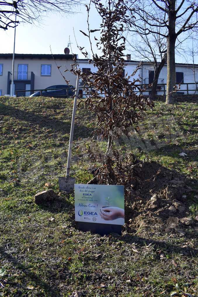 treiso albero trenino egea3