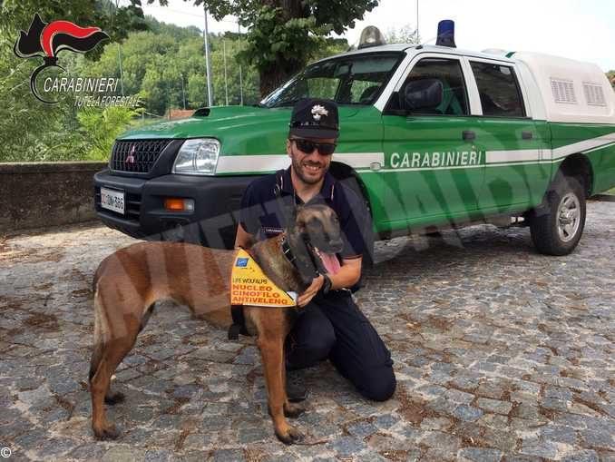 Nel 2019 i Carabinieri forestali hanno fatto sanzioni per quasi 3.5 milioni di euro 1