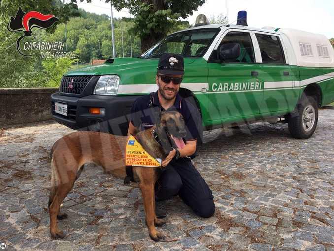 Carabinieri forestali-CINOFILO ANTIVELENO