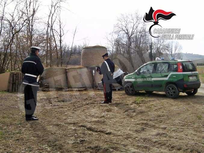 Avevano gettato rifiuti vicino al rio Colania, individuati, multatie costretti a pulire 3