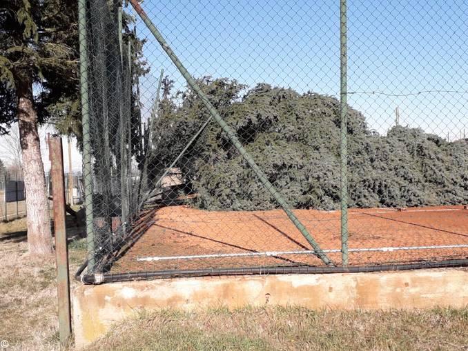 alberi abbattuti ceresole 3