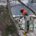 A Cortemilia giovane con il braccio schiacciato dall'albero che stava abbattendo: 118 e Vigili del fuoco al lavoro