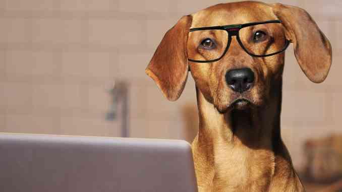 Sul posto di lavoro si può portare il cane