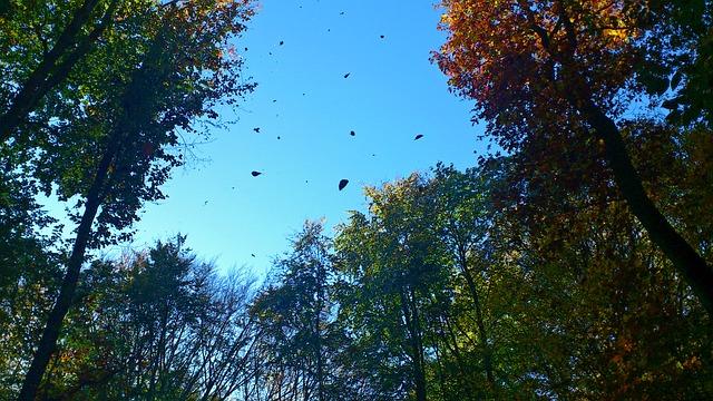 foglie-autunno-alberi