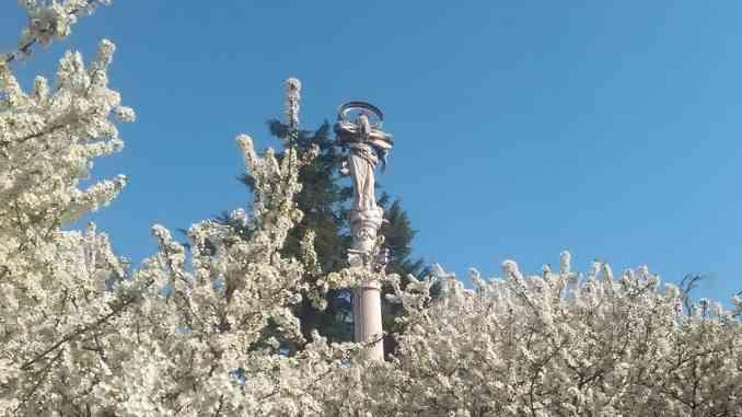 Fiorisce il pruneto del Santuario della Madonna dei Fiori, un segno di speranza in un momento difficile