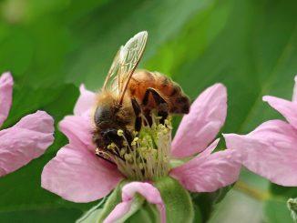 Invece del prato inglese semino fiori o il trifoglio