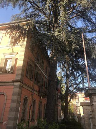 Saranno abbattuti la prossima settimana gli storici cedri della scuola Enologica di Alba 1