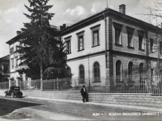 Saranno abbattuti la prossima settimana gli storici cedri della scuola Enologica di Alba