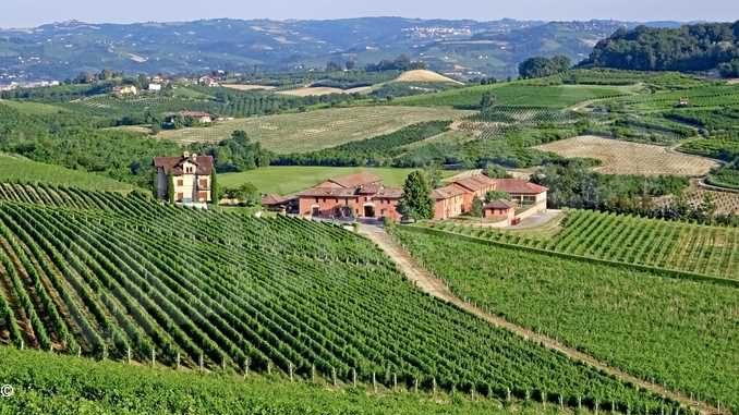 Terre Miroglio supera i 120 ettari di proprietà con le nuove acquisizioni per Alta Langa e Nizza Docg 1