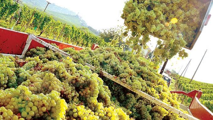Aziende agricole: dateci liquidità e delle braccia