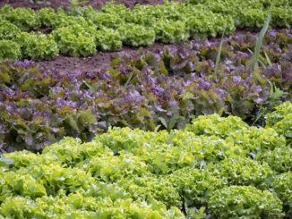 Ci si può spostare per coltivare gli orti per l'autoconsumo ma non per i giardini delle seconde case