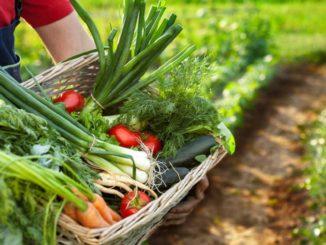 Emergenza in agricoltura: «per la manodopera, priorita' anche agli italiani».