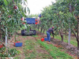 L'incognita delle problematiche sanitarie e sociali sulla raccolta della frutta nel Saluzzese