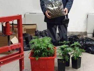 La Finanza sequestra 31 chili di marijuana e scopre, a casa di 4 indagati, 140mila euro in contanti