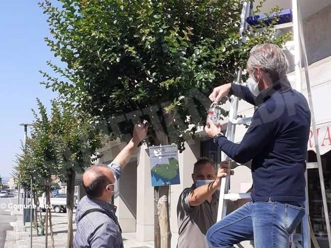 5.600 coccinelle sugli alberi albesi per la difesa biologica integrata
