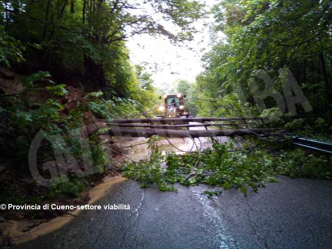 alberi crollati saluzzese1