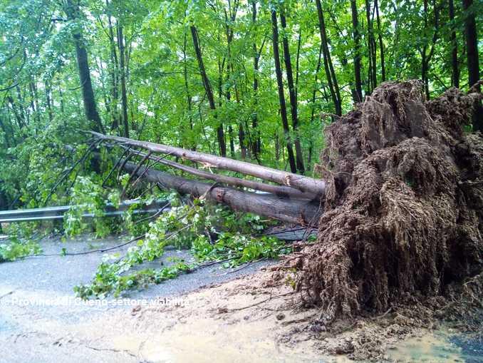alberi crollati saluzzese2