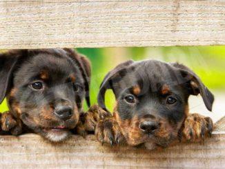 Petizione on-line per riaprire l'area di sgambamento dei cani in corso Europa