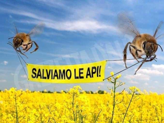 Tutela delle api, le indicazioni dalla Regione per il corretto utilizzo dei fitosanitari