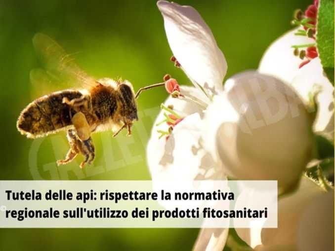 Tutela delle api, le indicazioni dalla Regione per il corretto utilizzo dei fitosanitari 1