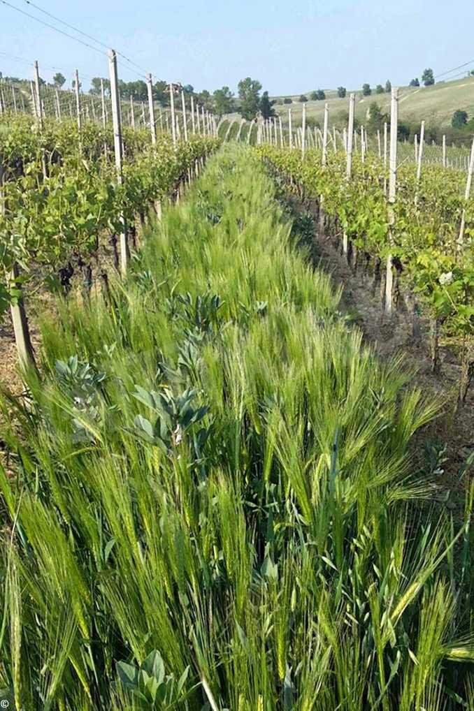 Coldiretti, nelle vigne l'evoluzione è verde, non la rivoluzione 1