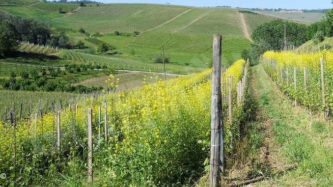 Coldiretti, nelle vigne l'evoluzione è verde, non la rivoluzione 2