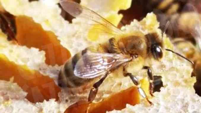 Aspromiele preoccupato: L'inquinamento fa molto male alle api piemontesi