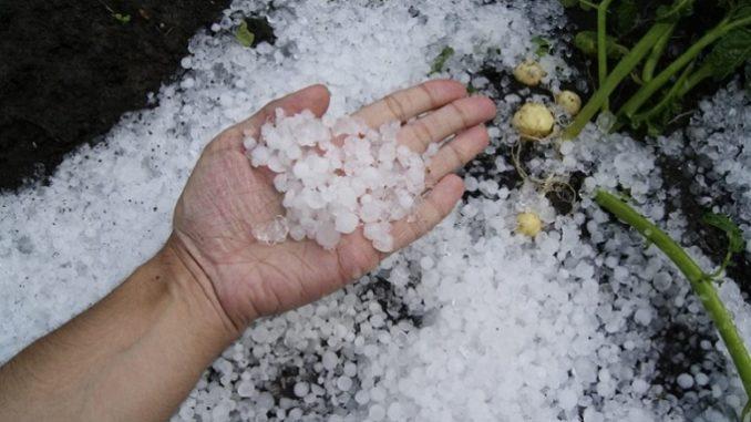 Maltempo: Coldiretti, settimana disastrosa per agricoltura