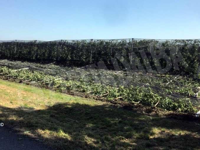 Tromba d'aria sul Cuneese: ingenti danni a frutta e cereali 1